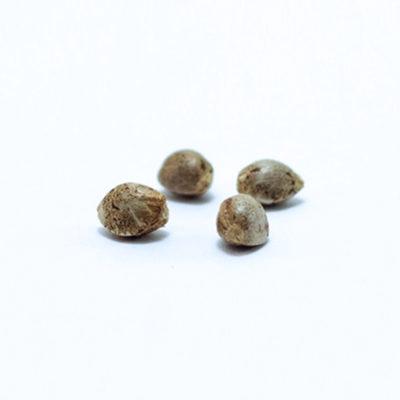 1024-semillas