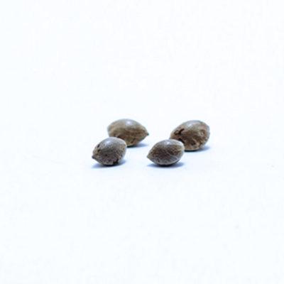 y-griega-cbd-semillas